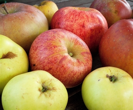 Organic is for apples: Why I've had it with leaving desegregation to chance
